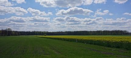 Krajobrazy w gminie Łubniany